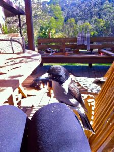 Butch the Bird on my knee
